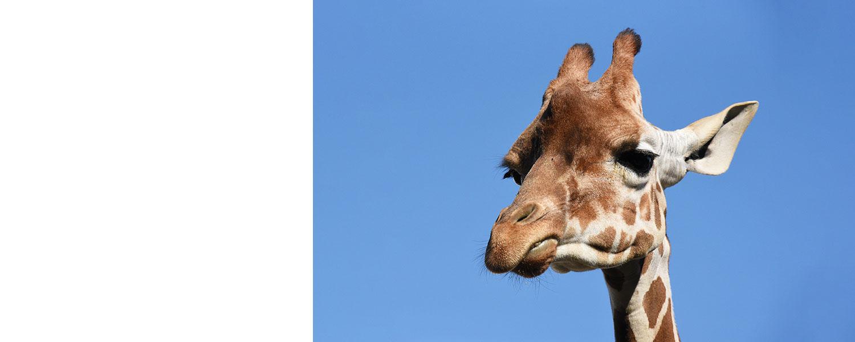 姫路市立動物園:トップページ